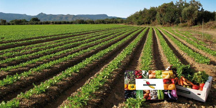 Marchand de légumes en ligne - plaisir du potager biologique et légumes